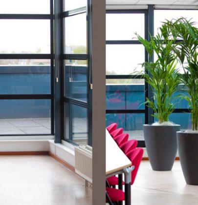 Groen wonen | Howea (Kentia Palm) = Woonplant van de Maand