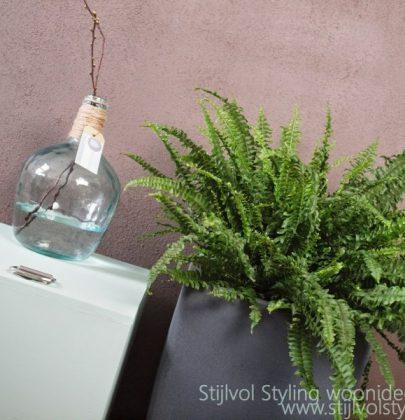 Groen wonen | Varen = Luchtzuiverende plant met pit