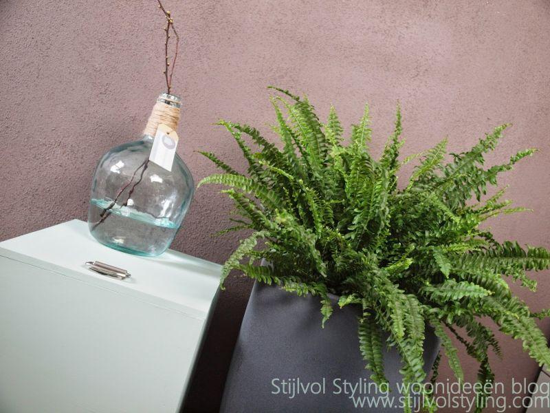 Zuiverende Planten Slaapkamer : Groen wonen Varen = Luchtzuiverende ...