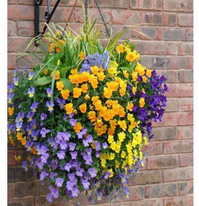 Tuin inspiratie   Tuin tips voor een mooie 'hanging basket' (hangmand)