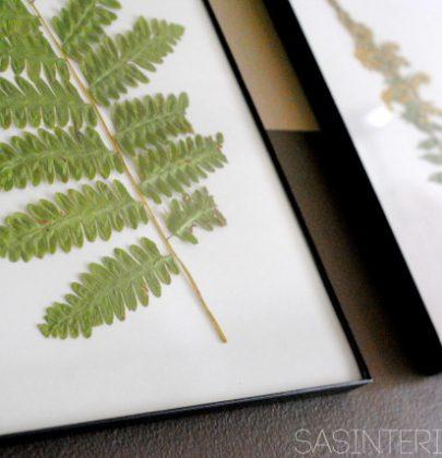 DIY   Ingelijste gedroogde bladeren