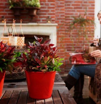 Tuin inspiratie | Herfst tuin inspiratie met de tuinplanten van de maand oktober