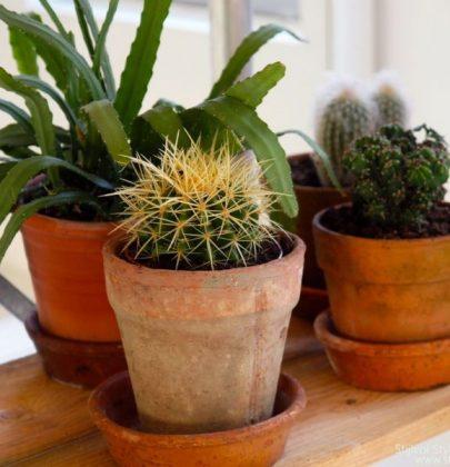 Groen wonen | Unexpected Wild – planten & bloemen trend 2015 nr.1