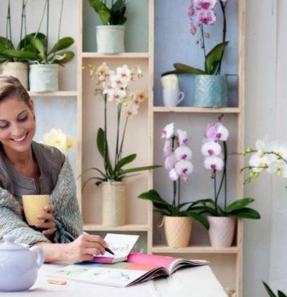 Groen wonen | Phalaenopsis Orchidee = Woonplant van de Maand december 2014