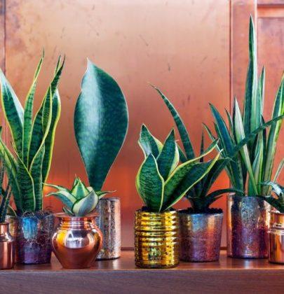 Groen wonen | Eco luxe – planten & bloemen trend 2015 nr.2