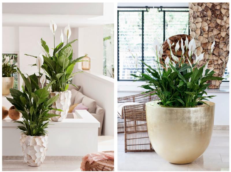 Groen wonen eco luxe planten bloemen trend 2015 nr 2 for Interieur trends 2015