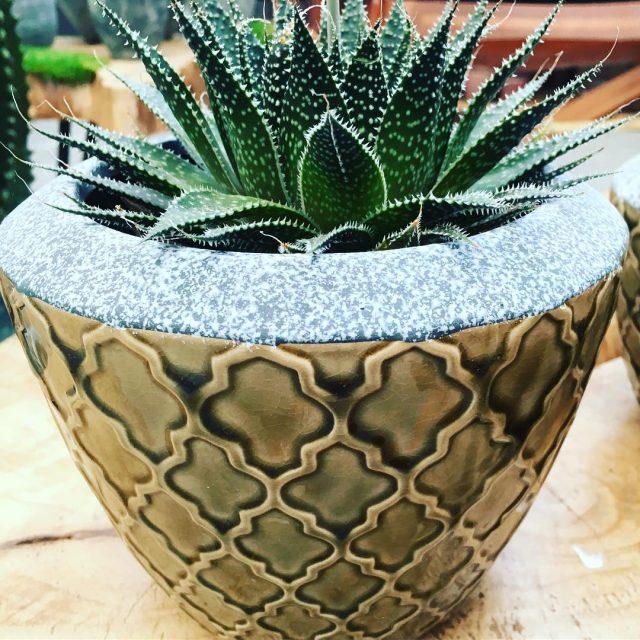 Urban jungle love woonblog wonen interieur planten aloe interior greenhellip