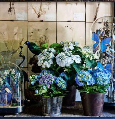 Interieur trend   Botanisch verzamelen versus de Hortensia
