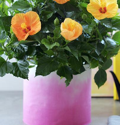 DIY   Dip-dye bloempot maken!