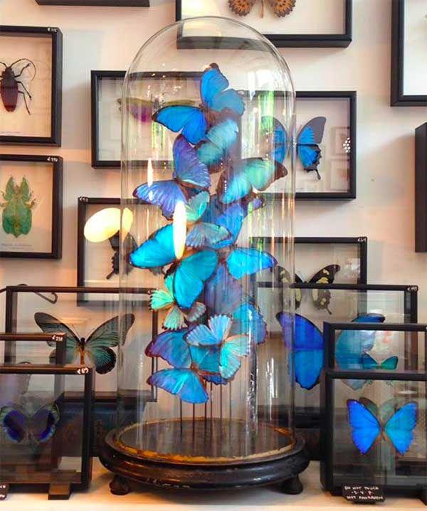 Interieur trends insecten als interieur decoratie stijlvol styling woonblog - Exterieur decoratie ...