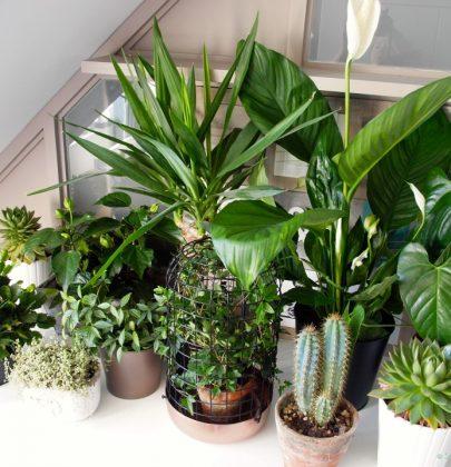 Groen wonen | Eerste hulp tips bij planten verzorgen