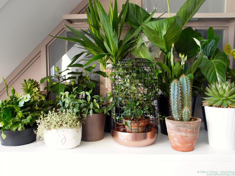 Slaapkamergeluk Plant : Groen wonen Show your plant gang voor Urban...