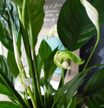 Groen wonen | Fris en energiek met luchtzuiverende planten
