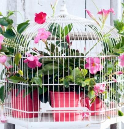 Tuin inspiratie   15 zomer tuinplanten toppers