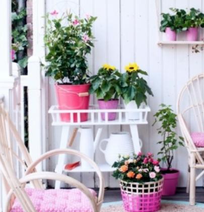 Buitenleven   De kleurrijke zomer tuin