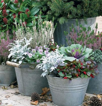 Tuin inspiratie   Genieten van jouw herfst tuin