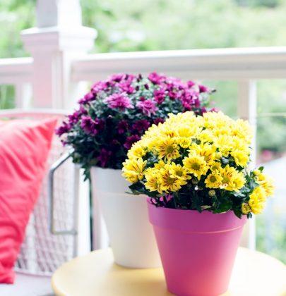 Tuin inspiratie | Na-zomeren met de Bolchrysant