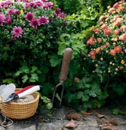 Buitenleven   7 handige onderhoudstips voor jouw najaarstuin