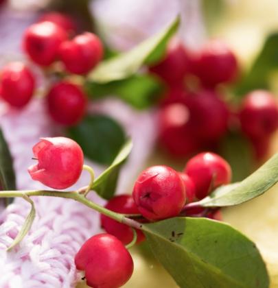 Buitenleven   Bergthee = Tuinplant vd Maand november