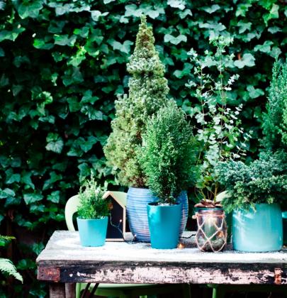 Buitenleven | Kleur je tuin met de blauwe conifeer