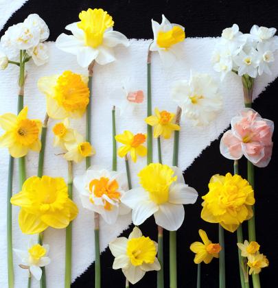 Groen wonen | De Narcis brengt het voorjaar in huis + DIY tip!