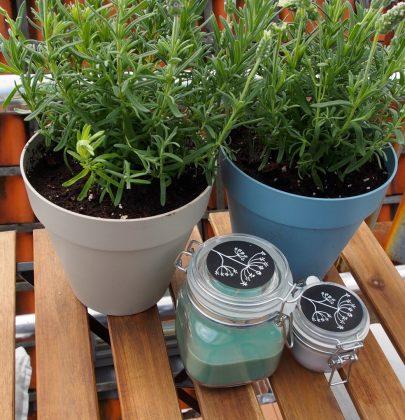Tuin inspiratie | Lavendel – Balkonplant van het jaar 2018