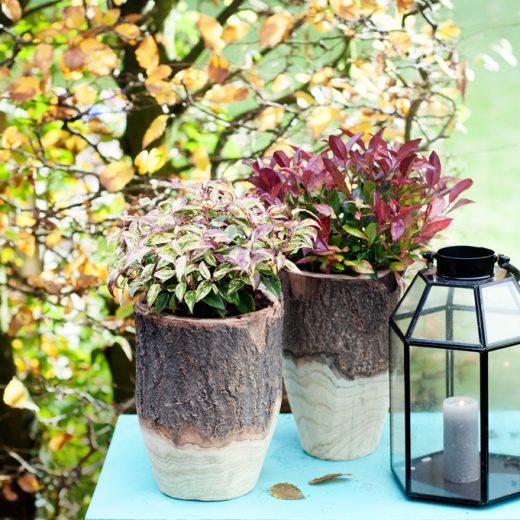 Buitenleven | Leucothoe bekend kleur in het najaar - Woonblog StijlvolStyling.com