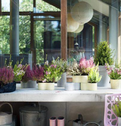 Tuin inspiratie | Winterheide = stoere winterbloeier