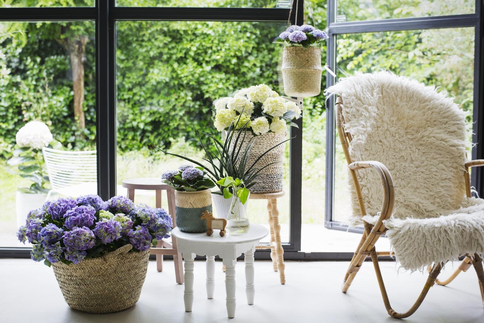 Groen wonen | Kamerhortensia in groen trend 'Equalise' - Woonblog StijlvolStyling.com