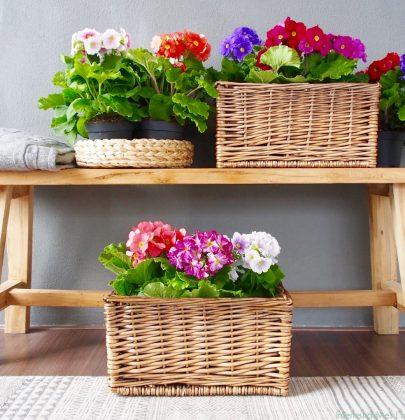 Groen wonen | Haal de lente in huis met Primula Touch Me