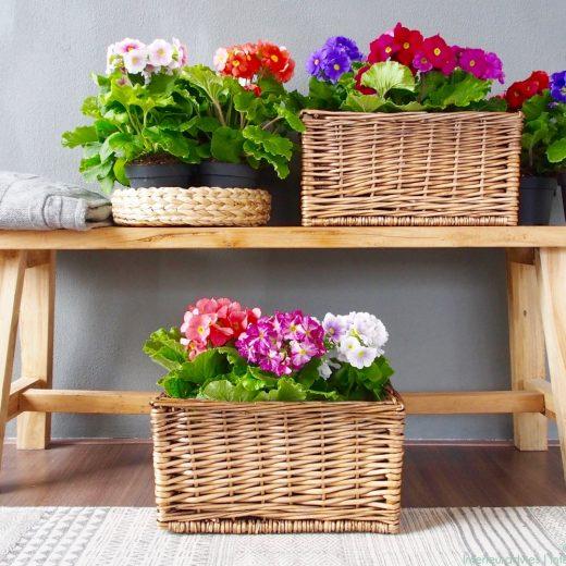 Groen wonen | Haal de lente in huis met Primula Touch me - Woonblog StijlvolStyling.com