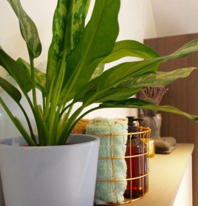 Groen wonen | 10 hippe badkamer planten voor een frisse look