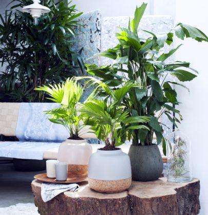 Groen wonen   Let's get tropical: exclusieve palmen