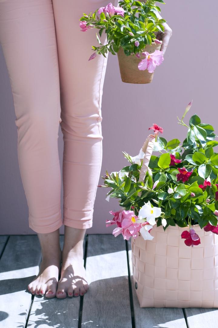 Buitenleven   Mandeville - bloemenzee tot ver in het najaar - Woonblog StijlvolStyling.com