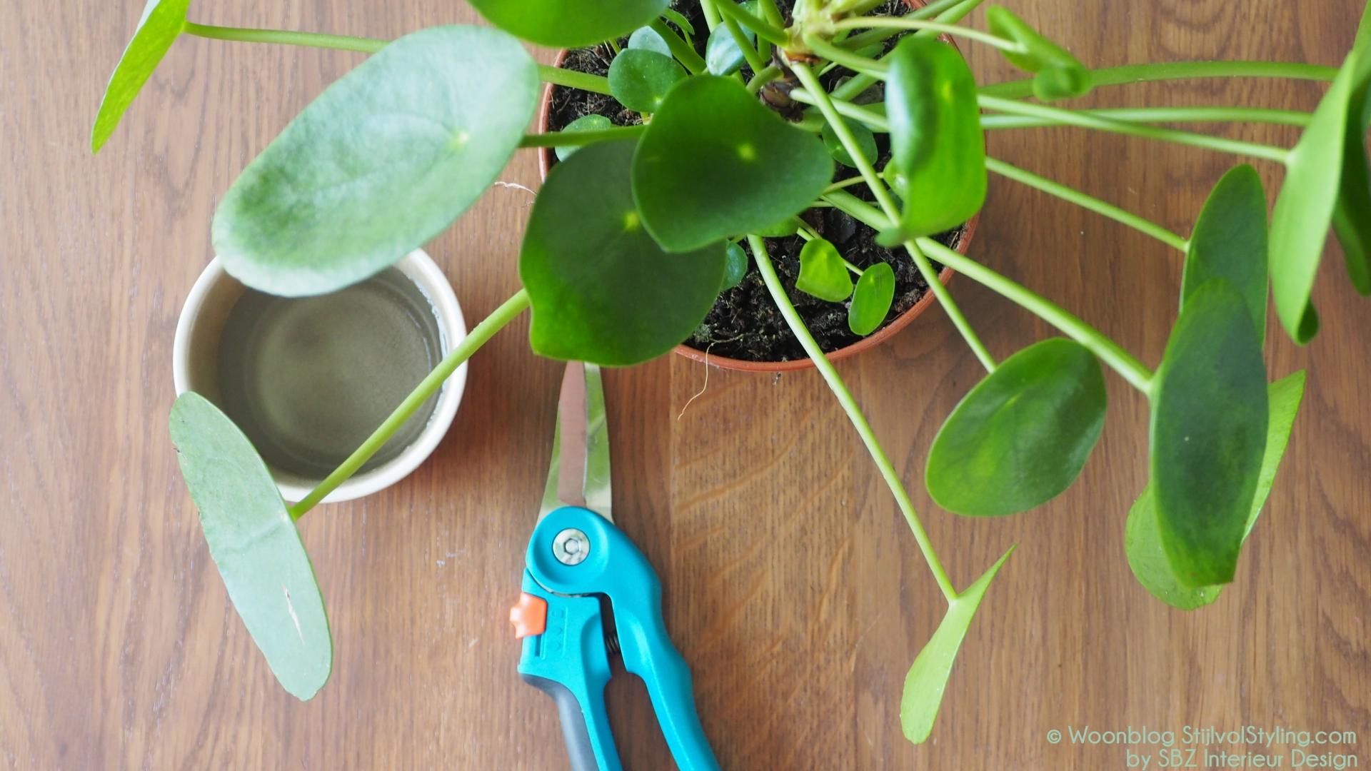 Groen wonen do it yourself pilea stekken stijlvol styling woonblog - Volwassen kamer trend ...
