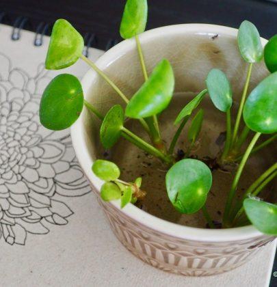 Groen wonen | Do it yourself – Pilea stekken
