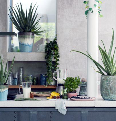 Groen wonen | De Aloë – Trendy, karakteristiek en stoer