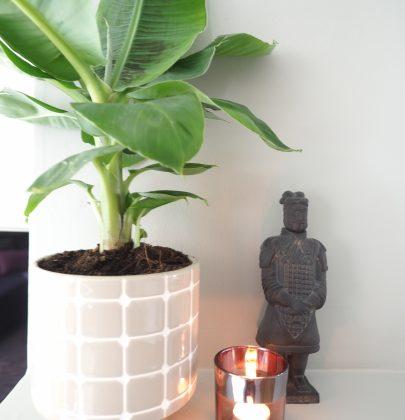 Groen wonen | Bananenplant brengt de tropische sfeer in huis