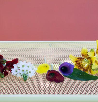 Tuin inspiratie | Zomerbollen brengen vrolijkheid in de tuin