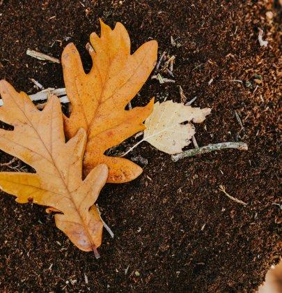 Buitenleven | De kleurrijke herfsttuin