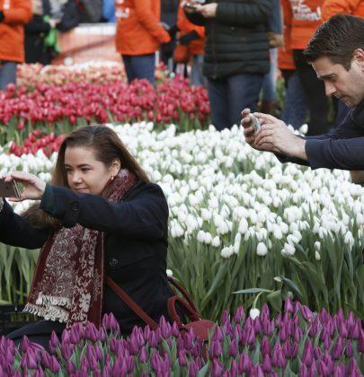 Er-op-uit   Tulpendag – Kleurrijke aankondiging van de lente