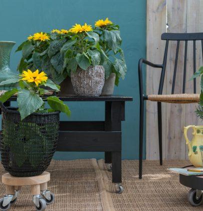 Tuin inspiratie | Zonnig vakantiegevoel met de zonnebloem