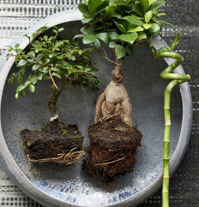 Groen wonen   Zen planten om bij tot rust te komen
