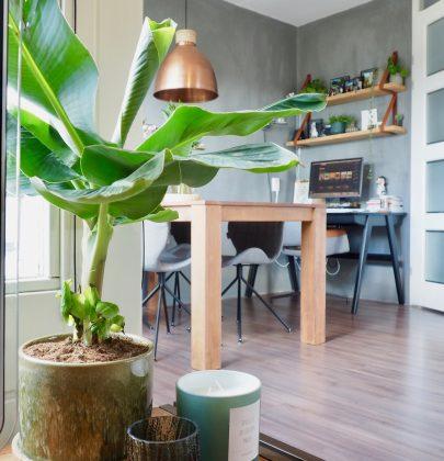 Groen wonen | De 3 hipste planten trends van dit moment