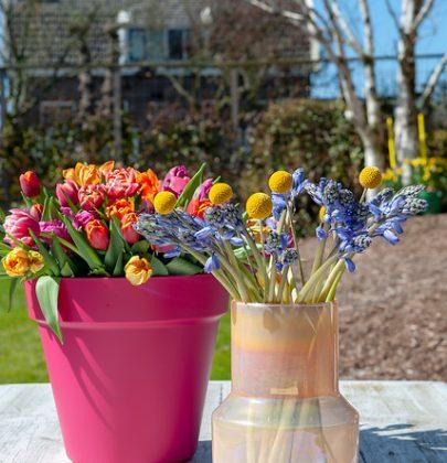 Tuin inspiratie | Bollen-op-pot; blij makers pur sang