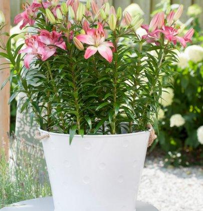 Tuin inspiratie | Lelies-op-pot: bloementrend van 2019