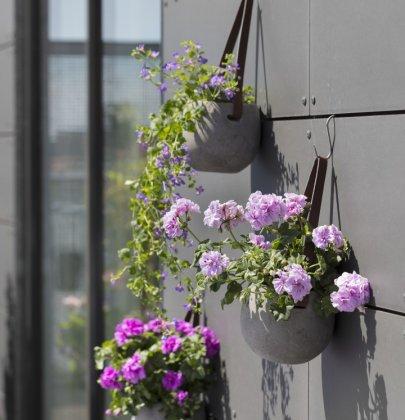 Tuin inspiratie   Geraniums: verrassend veelzijdig