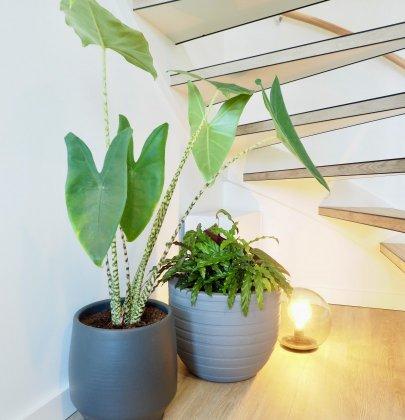 Groen wonen | Kerstboom eruit, plant(en) erin!